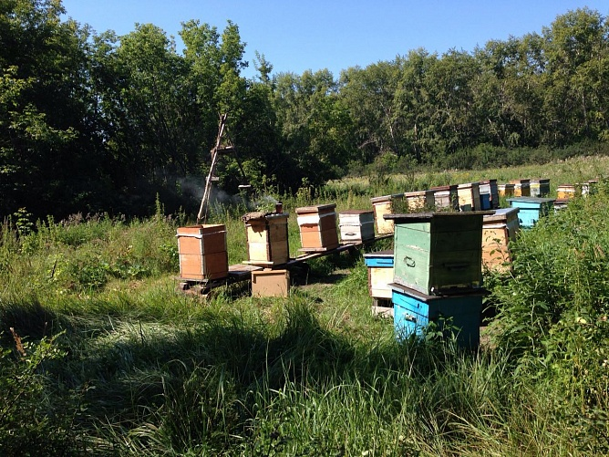 Apiaries and production